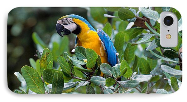 Blue And Yellow Macaw IPhone Case by Art Wolfe