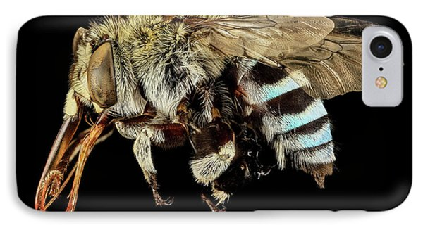 Blue Banded Bee IPhone Case