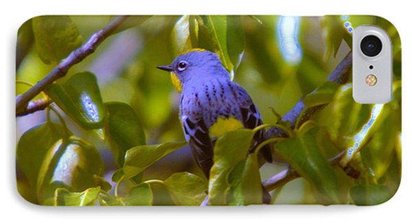 Blue Bird With A Yellow Throat Phone Case by Jeff Swan