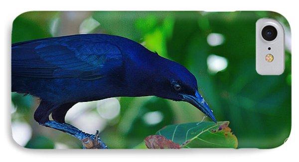 Blue-black Black Bird IPhone Case