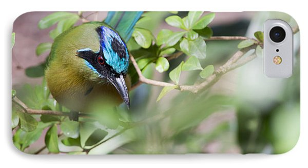 Blue-crowned Motmot IPhone Case by Rebecca Sherman