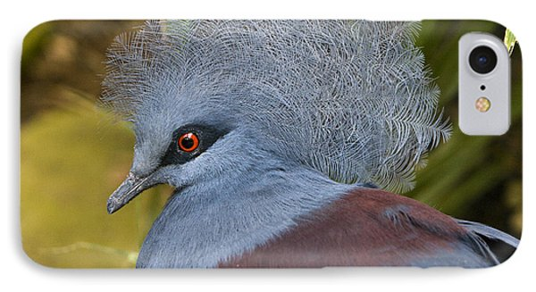 Blue-crowned Pigeon IPhone Case by David Millenheft