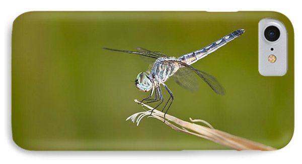 IPhone Case featuring the photograph Blue Dasher On The Edge by Bryan Keil