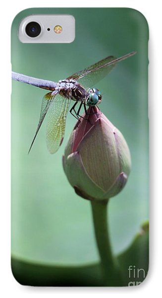 Blue Dragonflies Love Lotus Buds IPhone Case