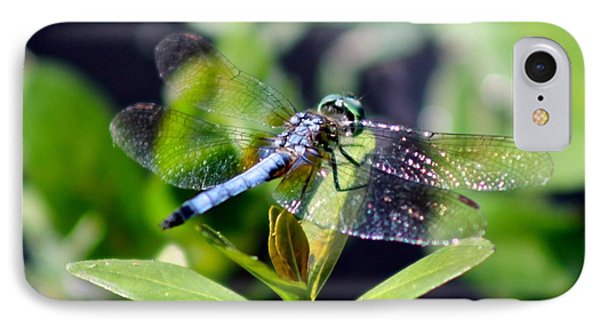 Blue Dragonfly Blue Dasher IPhone Case by Jeanne Kay Juhos
