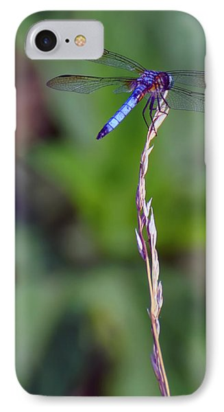 Blue Dragonfly On A Blade Of Grass  IPhone Case