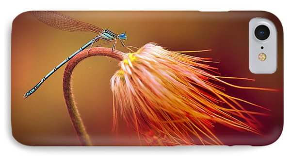 Blue Dragonfly On A Dry Flower IPhone Case by Jaroslaw Blaminsky