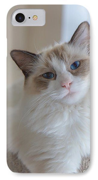 IPhone Case featuring the photograph Blue-eyed Ragdoll Kitten by Peta Thames