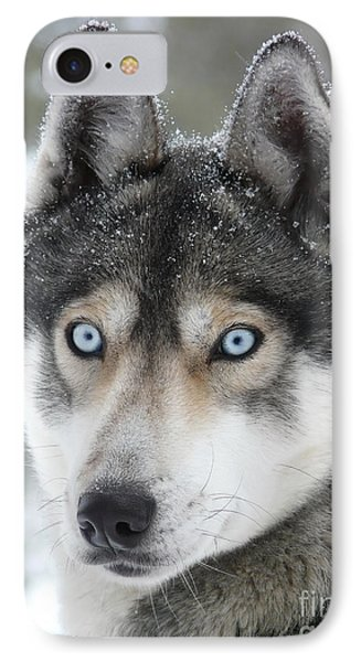 Blue Eyes Husky Dog IPhone Case by iPics Photography