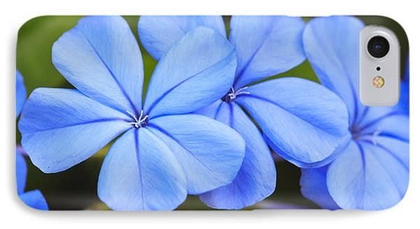 Blue Flax IPhone Case