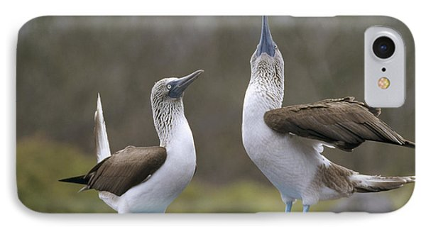 Blue-footed Boobies Courting Galapagos Phone Case by Tui De Roy