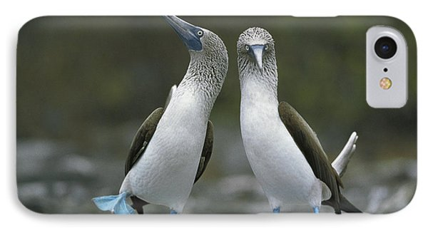 Blue Footed Booby Dancing Phone Case by Tui De Roy