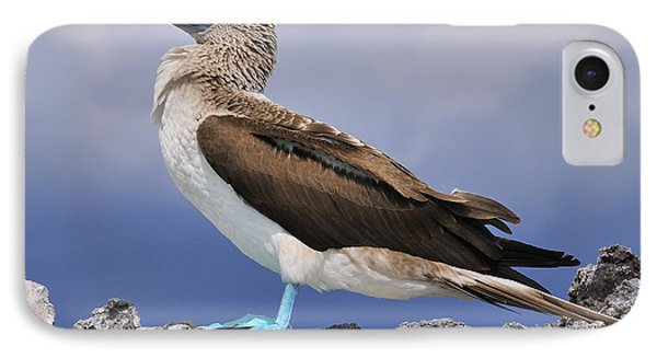 Blue-footed Booby IPhone Case by Tony Beck
