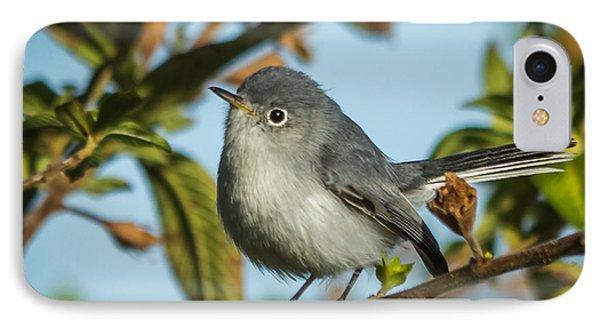 Blue-gray Gnatcatcher IPhone Case by Jane Luxton
