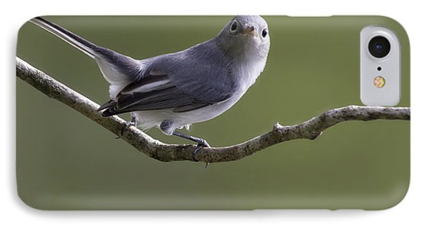 Blue-gray Gnatcatcher IPhone Case by Meg Rousher