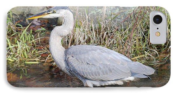 Blue Heron II IPhone Case