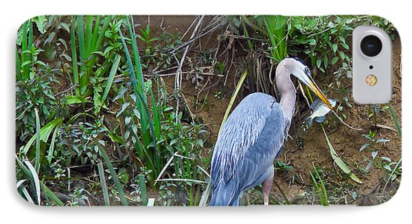 Blue Heron IPhone Case by Brian Williamson