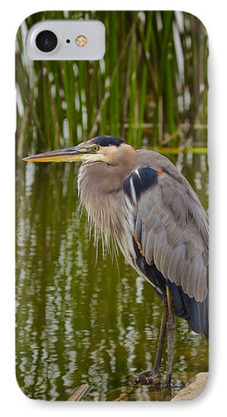 IPhone Case featuring the photograph Blue Heron by Duncan Selby
