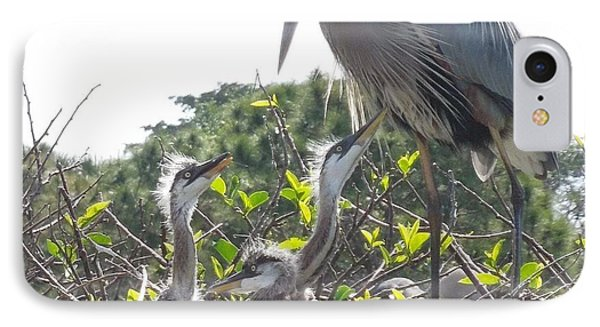IPhone Case featuring the photograph Blue Heron Family by Ron Davidson