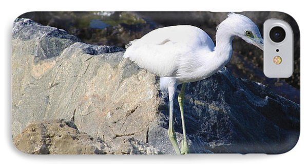 IPhone Case featuring the photograph Blue Heron Squared by Chris Thomas