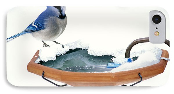 Blue Jay At Heated Birdbath IPhone Case by Steve and Dave Maslowski