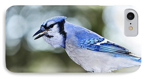 Blue Jay Bird IPhone Case by Elena Elisseeva