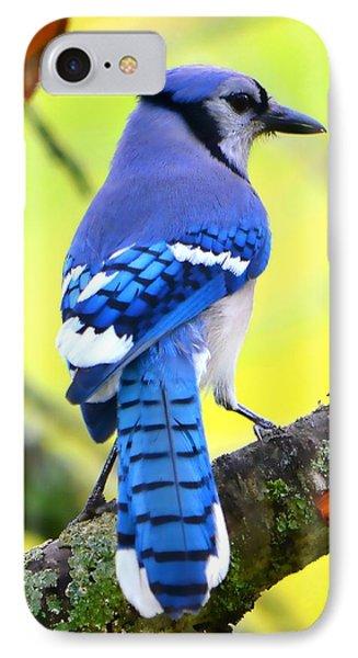 Blue Jay IPhone Case by Deena Stoddard
