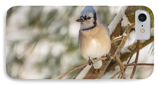Bluejay iPhone 7 Case - Blue Jay by Everet Regal