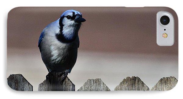 Blue Jay Fence 1 IPhone Case