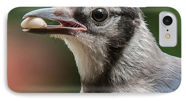 Blue Jay Formal Portrait IPhone Case by Jim Moore