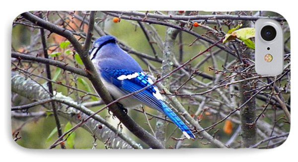 Blue Jay In A Cold Morning  IPhone Case by Edwin Alverio
