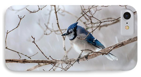 Blue Jay In Blowing Snow IPhone Case by Debbie Green