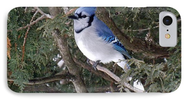 IPhone Case featuring the photograph Blue Jay In The Cedars by Brenda Brown