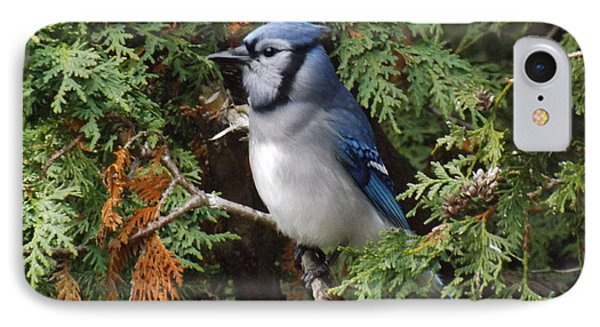 IPhone Case featuring the photograph Blue Jay In Cedar Tree 2 by Brenda Brown