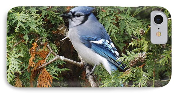 IPhone Case featuring the photograph Blue Jay In Cedar Tree by Brenda Brown