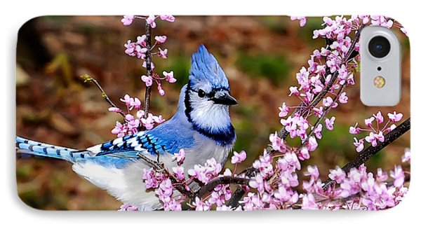 Blue Jay In The Pink IPhone Case by Randall Branham
