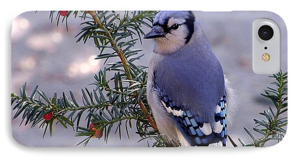 Blue Jay - Morning Visitor  IPhone Case by Susan  Dimitrakopoulos