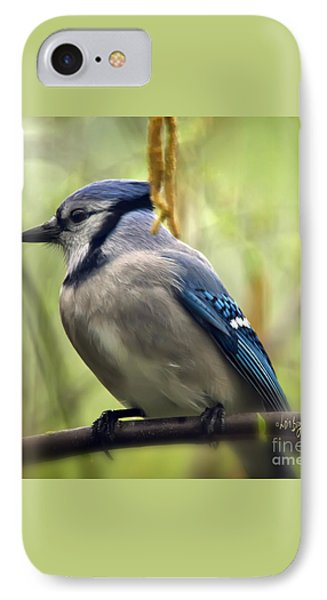 Blue Jay On A Misty Spring Day - Square Format IPhone 7 Case by Lois Bryan