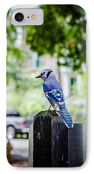 IPhone Case featuring the photograph Blue Jay by Sennie Pierson