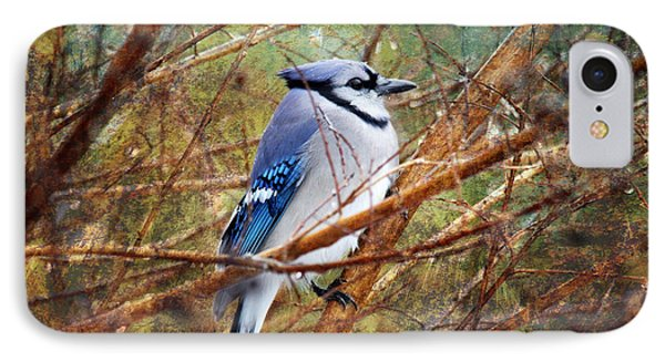 IPhone Case featuring the photograph Blue Jay by Trina  Ansel