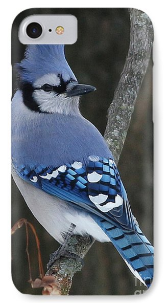 Blue Jay Winter IPhone Case