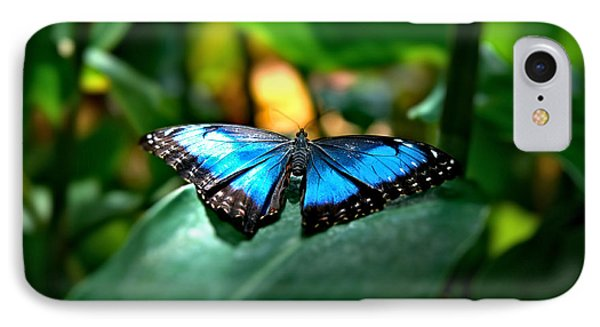 Blue Lit Butterfly IPhone Case