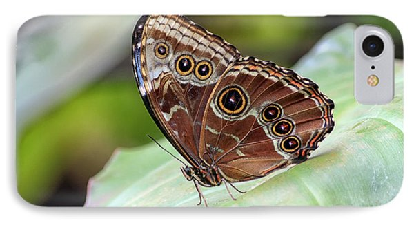 IPhone Case featuring the photograph Blue Morpho Butterfly by Teresa Zieba