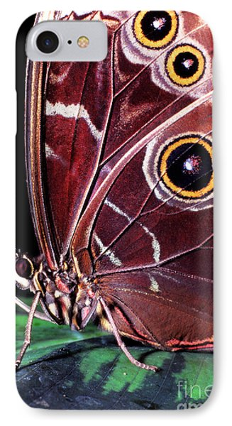Blue Morpho Butterfly IPhone Case by Thomas R Fletcher