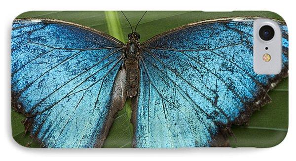 Blue Morpho - Morpho Peleides IPhone Case by Heiko Koehrer-Wagner