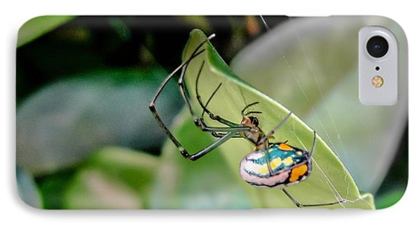 IPhone Case featuring the photograph Blue Orbweaver by TK Goforth