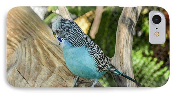 Blue Parakeet Phone Case by Renee Barnes