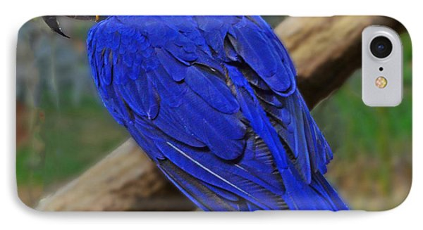 IPhone Case featuring the photograph Blue Parrot by Jack Moskovita