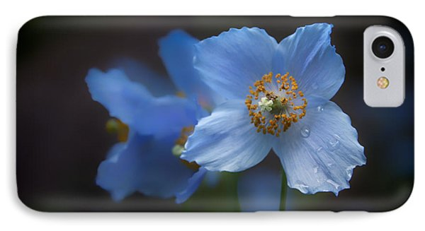 Blue Poppy IPhone Case by Jacqui Boonstra