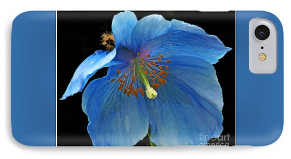Blue Poppy On Black IPhone Case by Chris Anderson